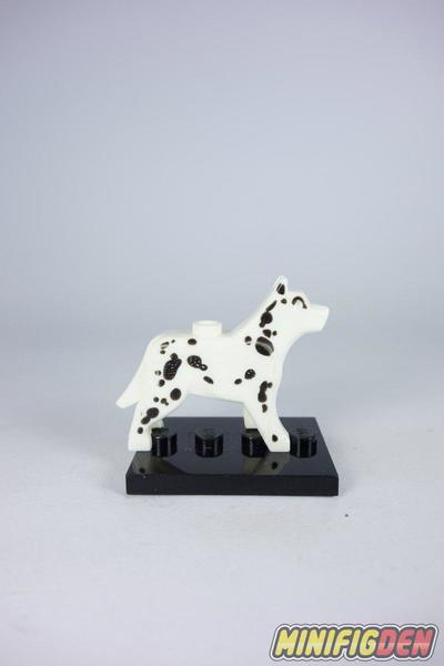 Dalmatian - Animals - Dogs