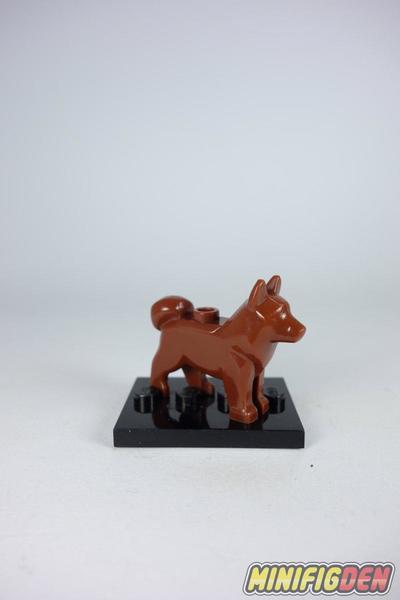 Akita - Animals - Dogs