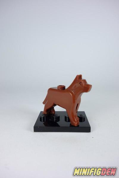 German Shepherd - Animals - Dogs